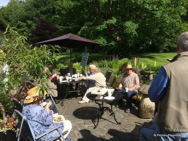 Tea-on-Wern-Rhos-Patio