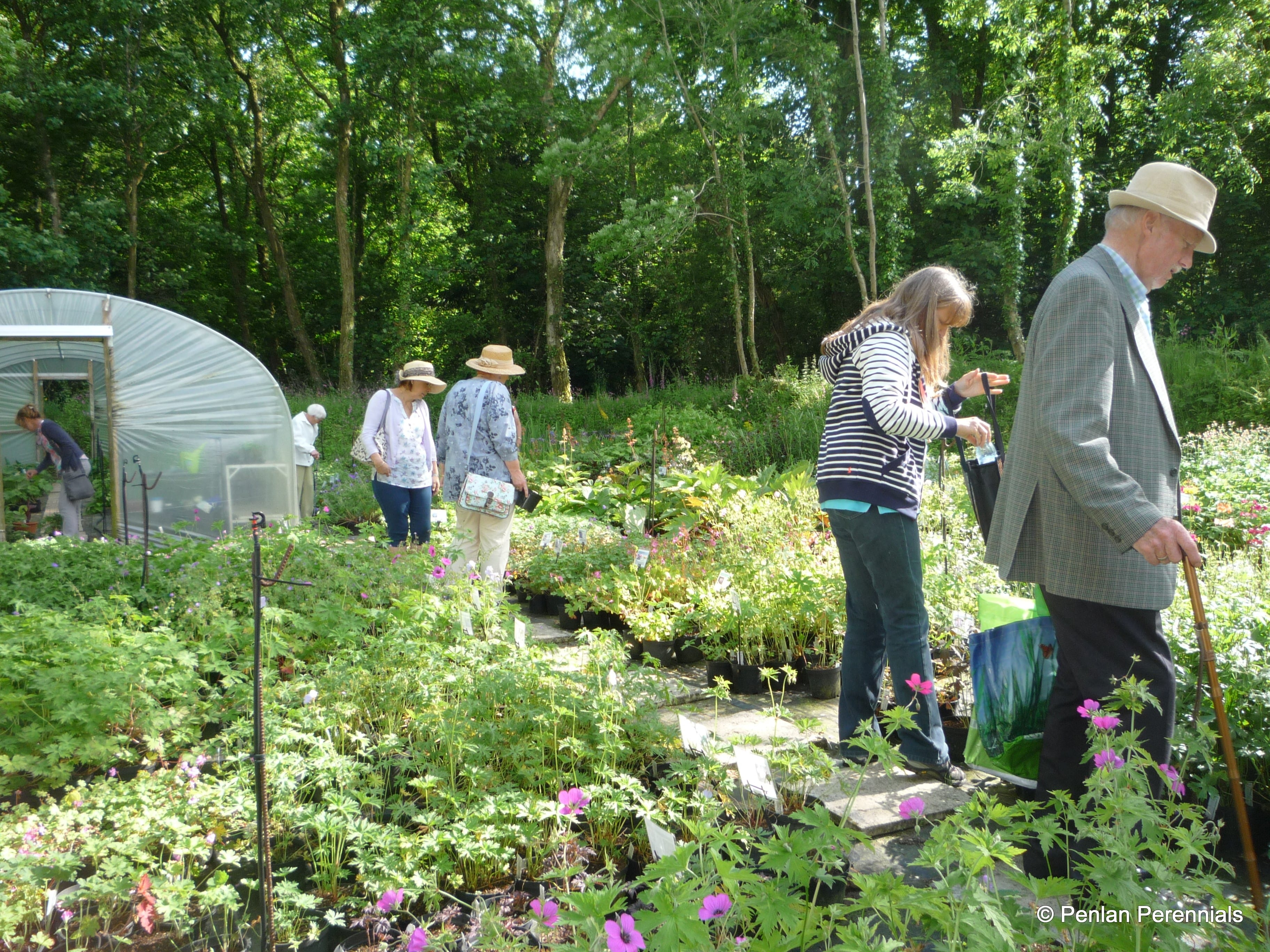 Kidwelly Garden Club Visit