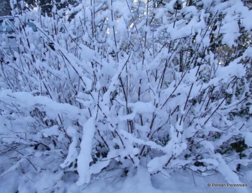 Plants for Winter Interest